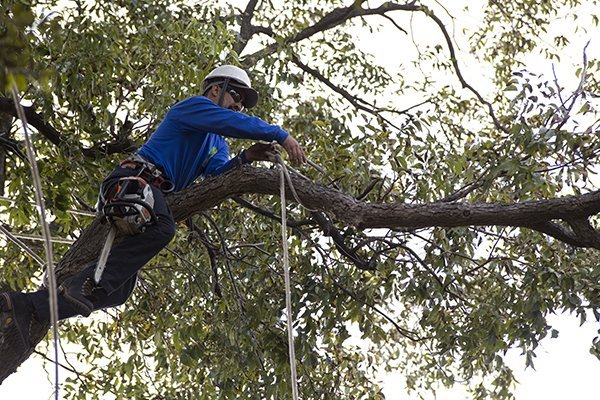 PLANO TREE TRIMMING