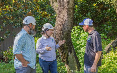 """New to Texas? Buying a Home """"For the Trees?"""" A Consulting Arborist Can Help!"""
