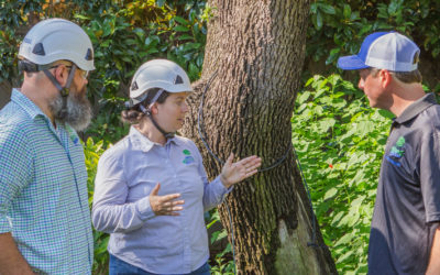Preservation Tree Services